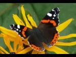 Evolution ou Création - Que raconte l'aile de papillon?