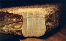 47_noahs-ark_petrified_wood.jpg